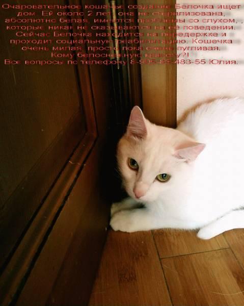 Очаровательное кошачье создание
