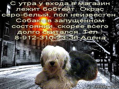 Серо белый пол неизвестен собака