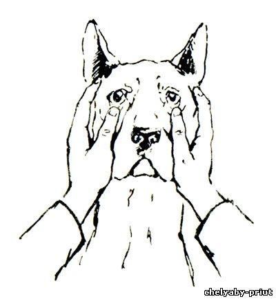 Главная статьи ветеринария