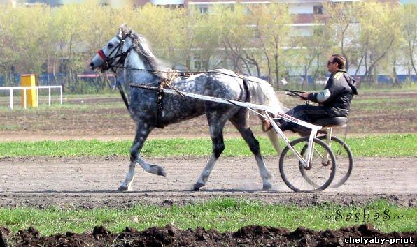 Horse pegas 407